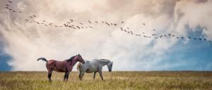 cropped-horses.jpg