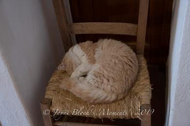 Jayni- (12 of 19)